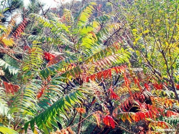秋天3d风景动态图片