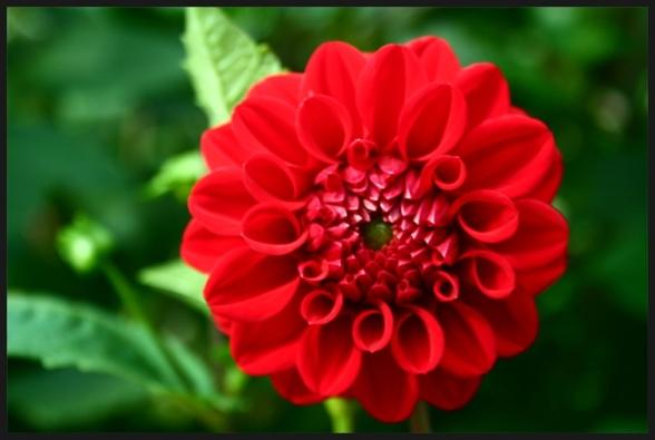 꽃에 대한 이미지 검색결과