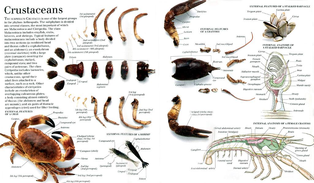 各种动物的肌肉,骨骼[图]