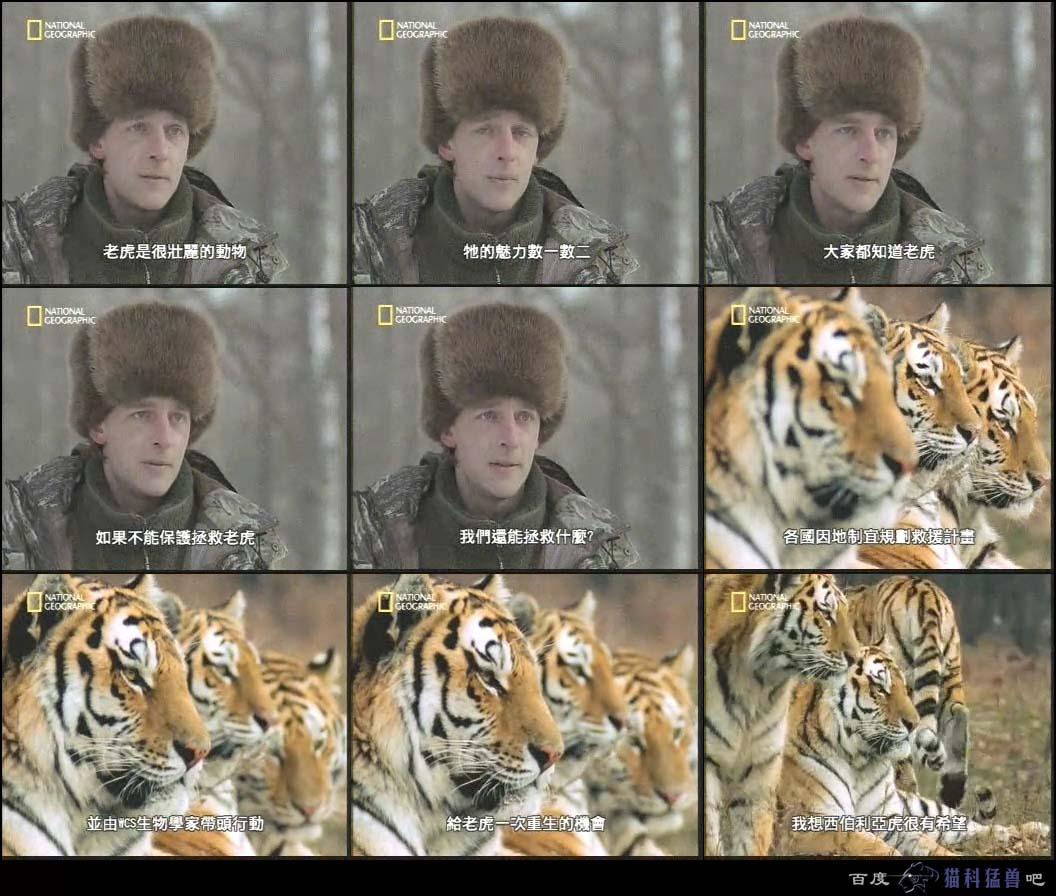保护野生动物,人人有责!