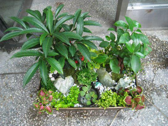 작은 정원 만들기